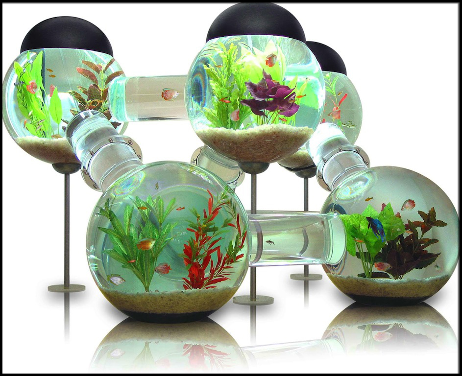 the labyrinth aquarium 6 500 pricey pads. Black Bedroom Furniture Sets. Home Design Ideas