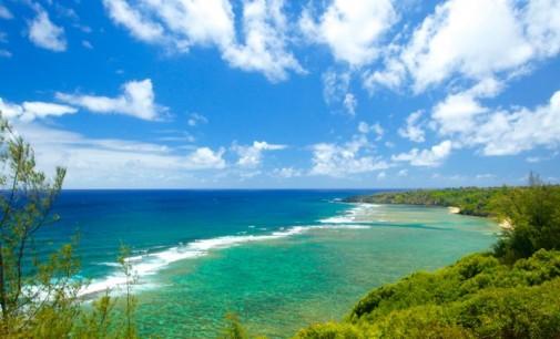 Kilauea Farms Absolute Auction