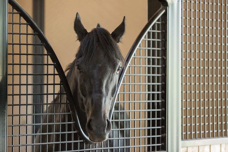 Equestrian-0135