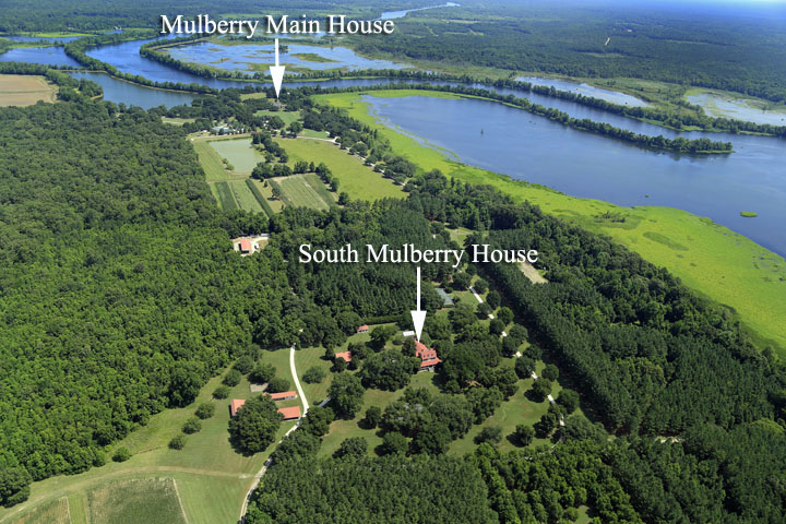 mulberry-plantation39